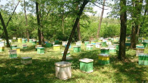 vand miere de albine 2016