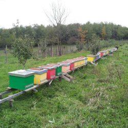 vand-stupi-cu-familii-de-albine-si-multe-alte-accesorii-apicole_1